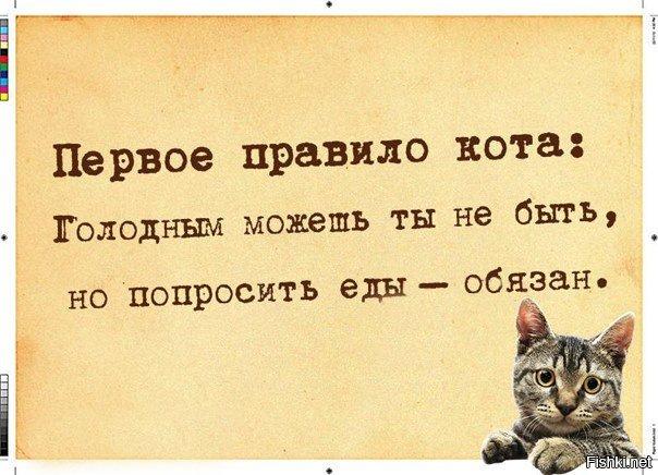 Первое правило кота