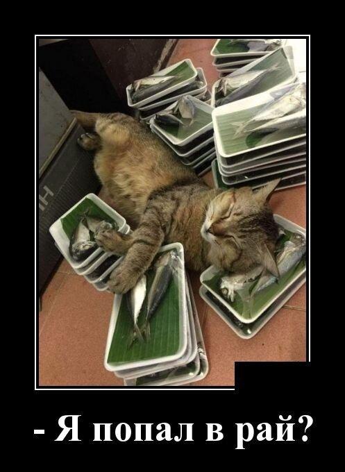 Ах, эти котики!