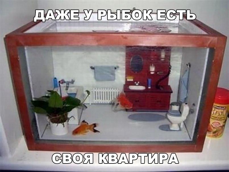 Даже у рыбки есть своя квартира