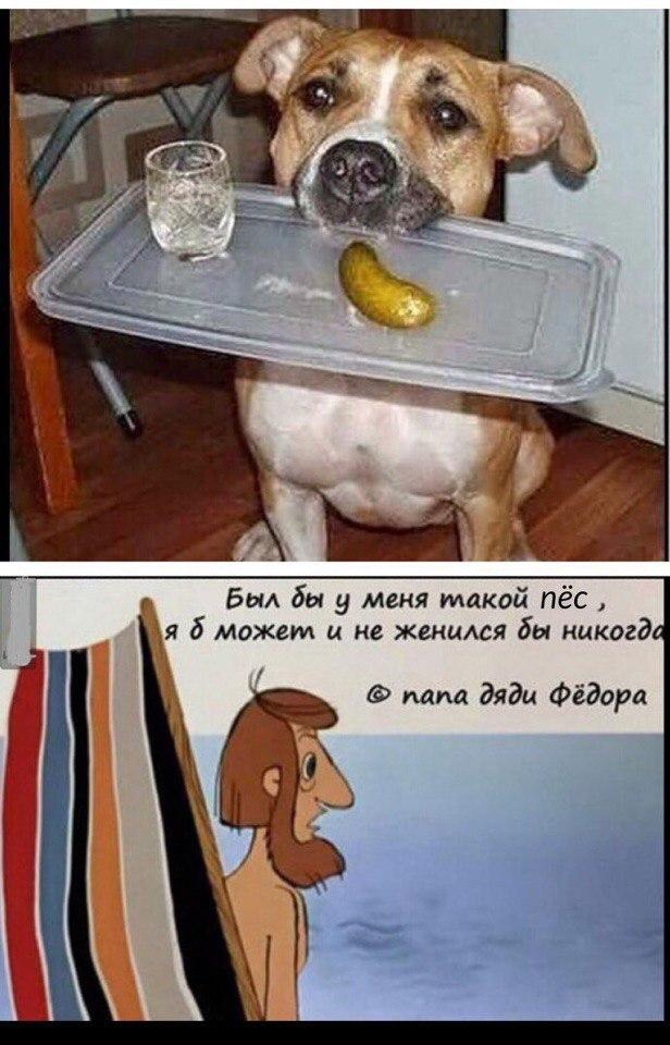 Прикольные картинки про собаку друга человека с подписью